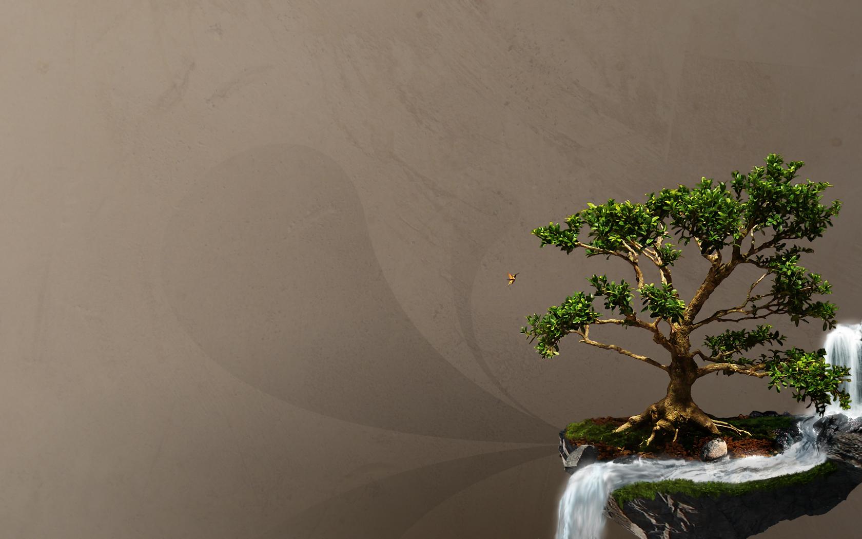 Hd wallpaper zen - Bonsai Wallpapers Hd Taringa